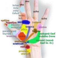 Masáž orgánov tela cez dlaň