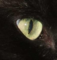 oko-macky.jpg